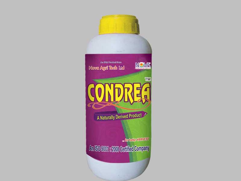 condrea